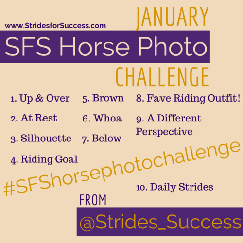 January Horse Photo Challenge#SFSHorsePhotoChallenge
